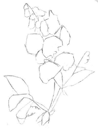 水粉画豌豆花绘画步骤一
