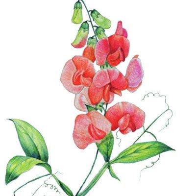 水粉花卉画 我爱画画网