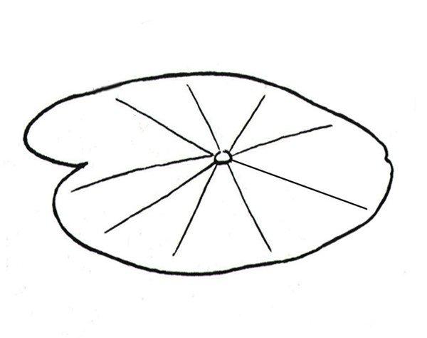 白描荷花的绘画教程(5)