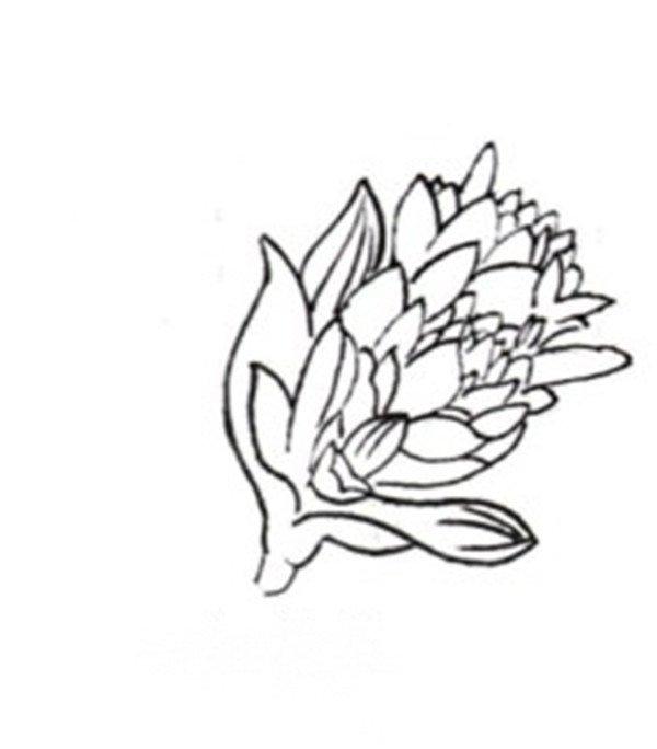 白描玉簪花的绘画步骤图片