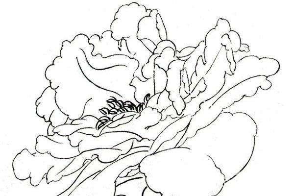 白描芍药的绘画步骤