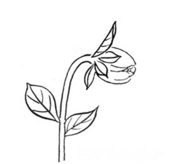 工笔白描大丽花手法与绘画步骤教程