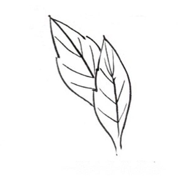 简单叶子画图片和步骤