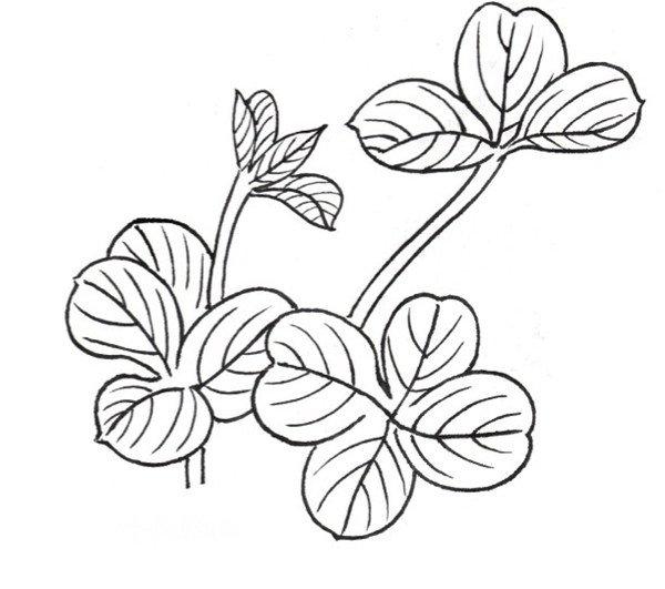 学画画 国画教程 工笔画 > 白描酢浆草的绘画技法(3)