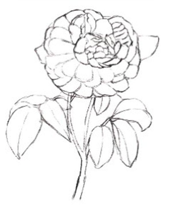 水粉画玫瑰绘画步骤二