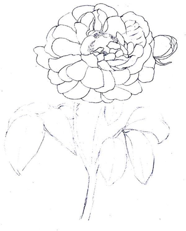 水粉画玫瑰的绘画技法步骤教程(4)