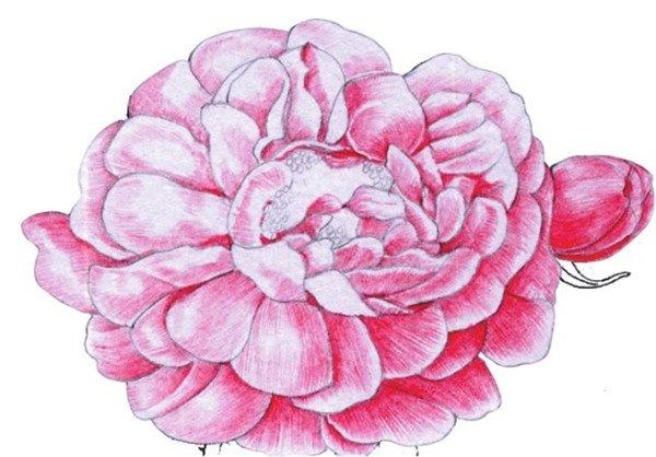 水粉画玫瑰的绘画技法步骤教程 5