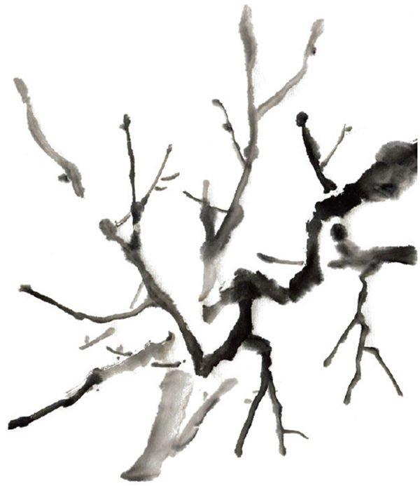 水墨画梅花绘画步骤教程 www.woaihuahua.com 宽600x693高