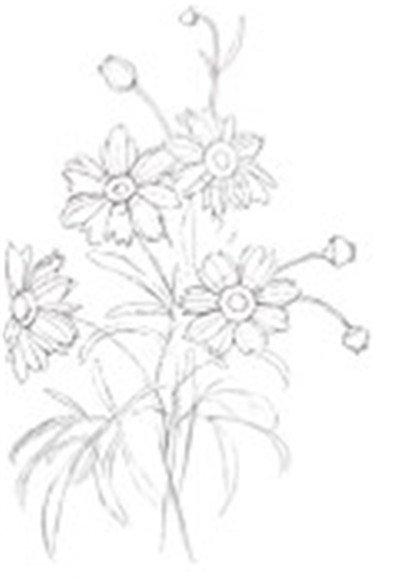 水粉花卉画入门 金鸡菊花的绘画步骤教程
