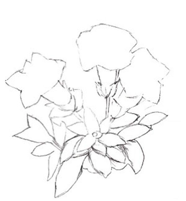 > 水粉画龙胆的绘画步骤(4)      三,实战演练    1,使用铅笔勾勒出