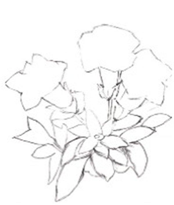 一,水粉龙胆的绘画步骤    1,绘制外部形态    2,将线稿完善    3