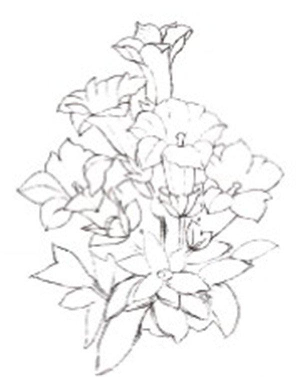 简单手绘花卉植物步骤