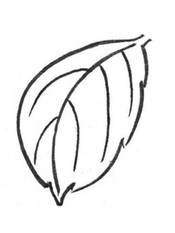 学画画 国画教程 工笔画 > 白描扶桑花的绘画步骤(2)      3,单片叶子