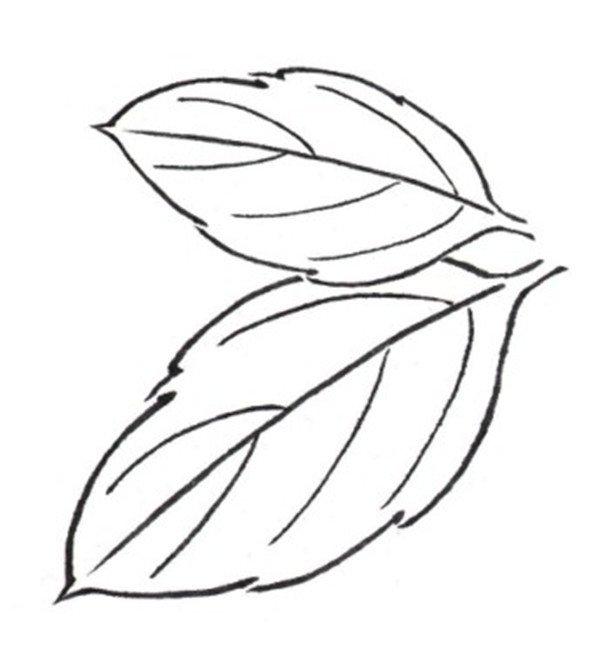 白描扶桑花双叶图片