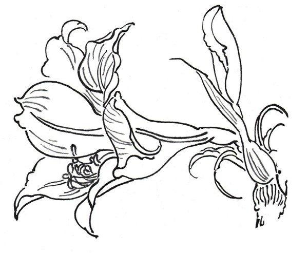 虎尾兰又名锦兰、虎皮兰,属百合科,多年生草本观叶植物,根状茎。叶簇生,肉质线状披针形,硬革质,直立,基部稍呈沟状;暗绿色,两面有浅绿色和深绿相间的横向斑带,稍被白粉。总状花序,花白色至淡绿色,味甜美,花期为春夏季。 虎尾兰叶片坚挺直立,姿态刚毅,奇特有趣;它品种较多,株形和叶色变化较大,精美别致;对环境的适应能力强,是一种坚韧不拔的植物。适合布置装饰书房、客厅、办公场所,可供较长时间欣赏。分享白描虎皮兰的