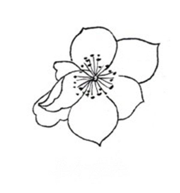 杏花蝴蝶白描手法步骤教程
