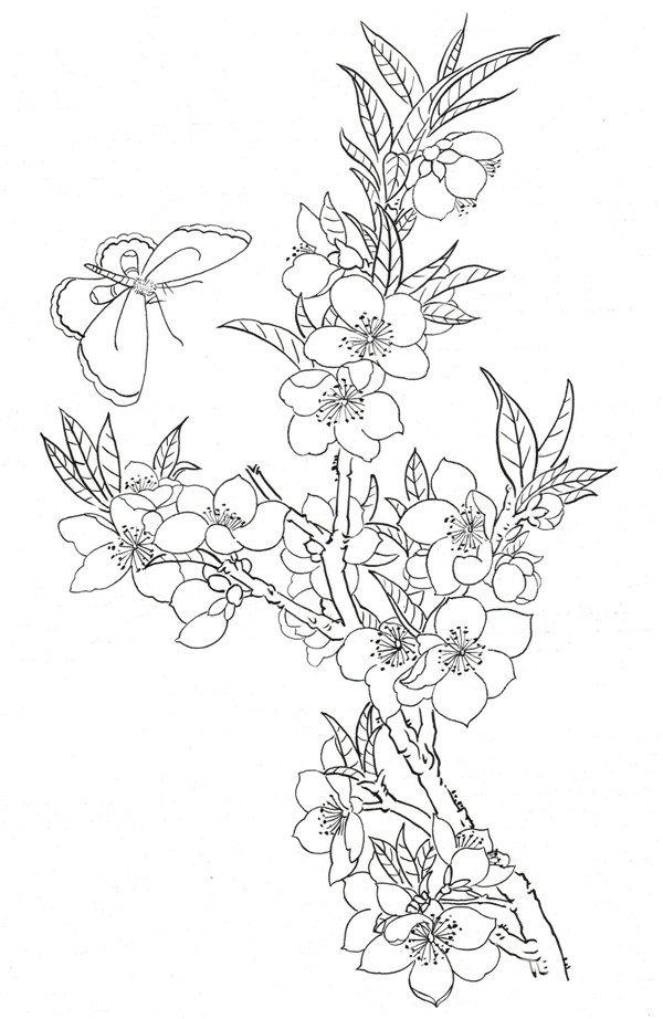 8、枝干的形态 白描杏花蝴蝶局部八 二、杏花蝴蝶白描 枝头的花瓣盛开,花瓣和叶子错落有致,层次分明,飞舞的蝴蝶给画面增加了几分生气。 杏花蝴蝶白描 组合性搭配 绘画 ,一定要注意事物之间的层次性,这样画面才