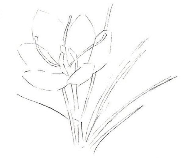 水粉画花卉画入门:番红花的绘画步骤教程