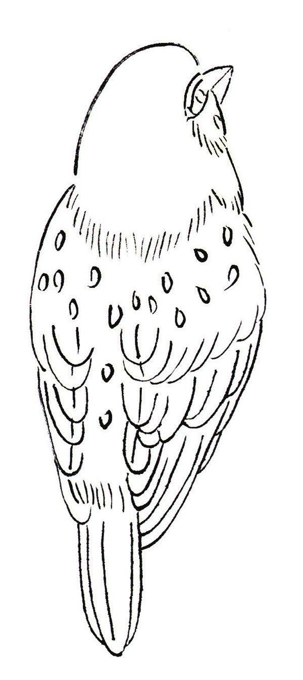 常见的题材,用白描表现麻雀时,要注意观察麻雀的动态特点,将麻雀表现得准确、生动。  白描麻雀:觅食的形态  白描麻雀:背面的形态  白描麻雀:飞行的形态