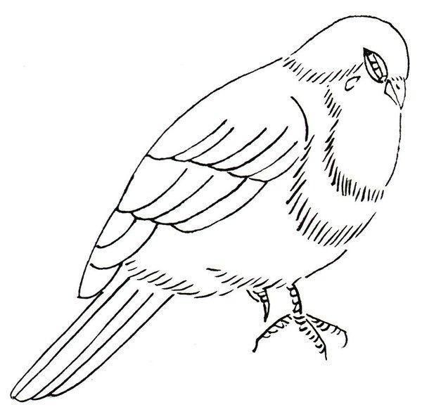 麻雀白描画图片作品欣赏(4)