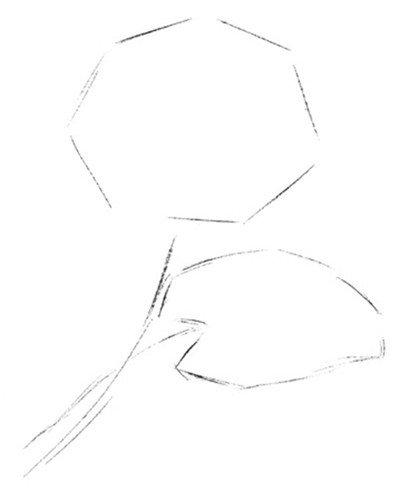 彩铅睡莲的绘画步骤