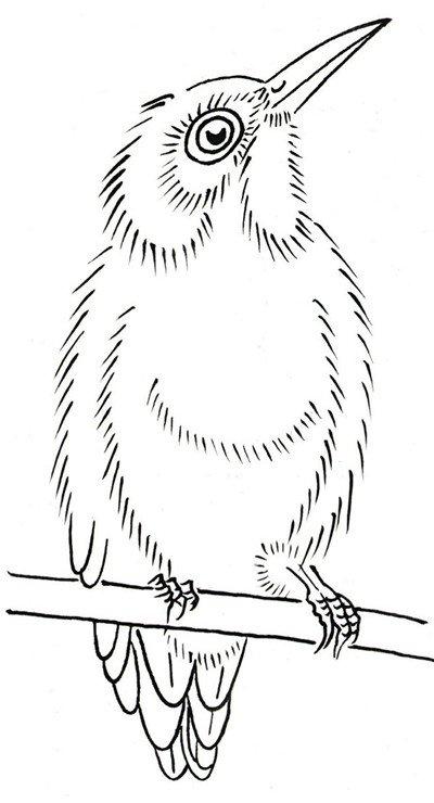 翠鸟的简笔画大全