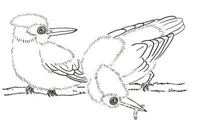 白面两只翠鸟的组合手法-白描禽鸟入门 白描翠鸟手法 3