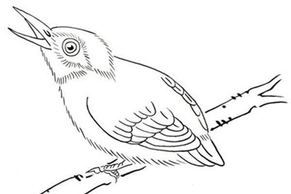 简笔画小鸟图片 小鸟简笔画图片大全 6