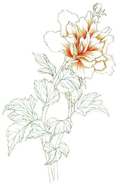 彩铅木槿花的绘画教程(4)
