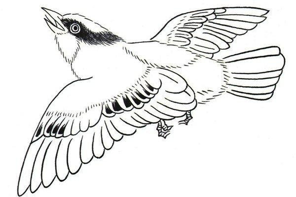 白描禽鸟:黑脸山雀白描画图片欣赏