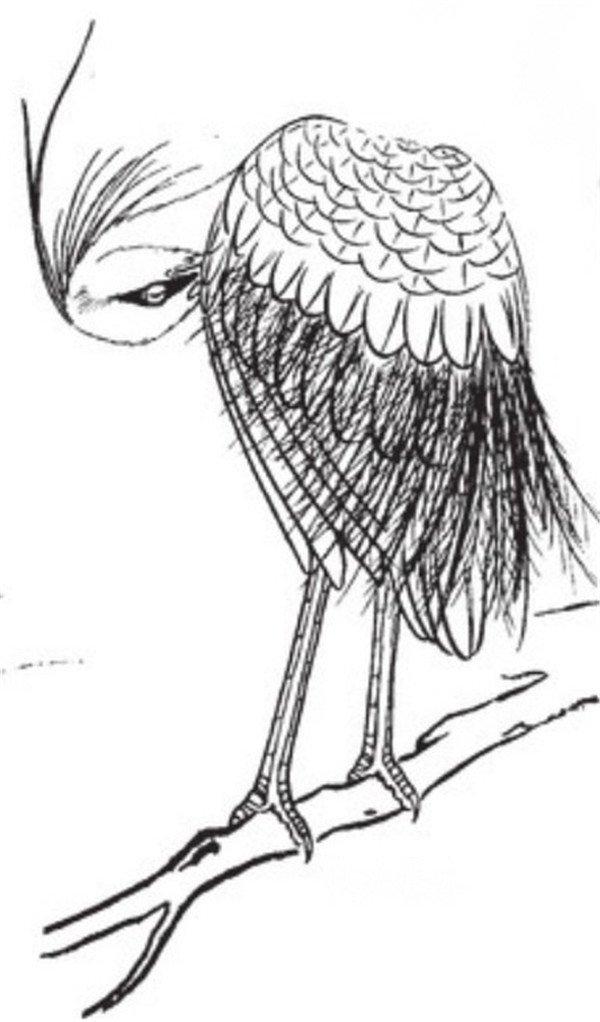 白鹭,别名小白鹭、白鹭鸶、白翎鸶,中型涉禽,属于鹭科白鹭属。白鹭属共有13种鸟类,其中有大白鹭、中白鹭、白鹭(小白鹭)、黄嘴白鹭和雪鹭体羽皆是全白,世通称白鹭。大白鹭体型大,既无羽冠,也无胸饰羽,中白鹭体型中等,无羽冠但有胸饰羽;白鹭和雪鹭体型小,羽冠及胸的羽全有。  白描枝头站立的白鹭  白描水中觅食的白鹭  白描枝头挠痒的白鹭