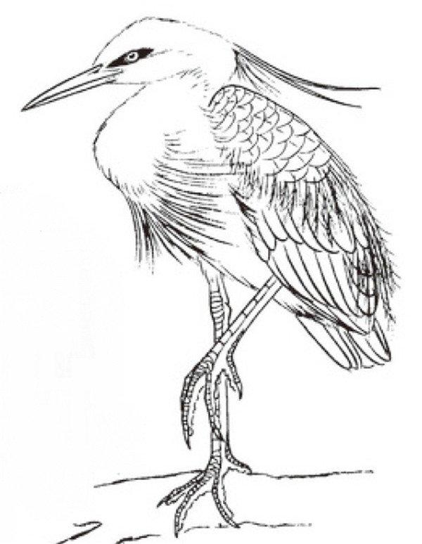 白鹭羽毛简笔画