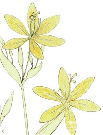 背景 壁纸 绿色 绿叶 设计 矢量 矢量图 树叶 素材 植物 桌面 400_526
