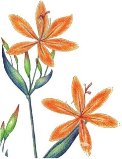 水粉射干花的绘画步骤教程(6)
