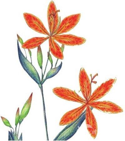 水粉画技法 > 水粉射干花的绘画步骤教程(6)      9 ,加深花瓣颜色,使