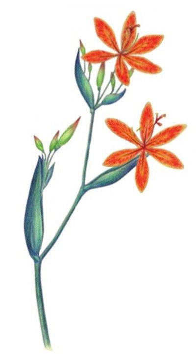 水粉画技法 > 水粉射干花的绘画步骤教程(6)      9 ,加深花瓣颜色