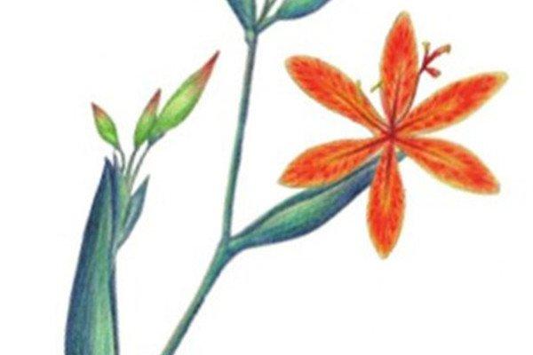 水粉射干花的绘画步骤教程