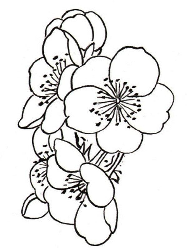 学画画 国画教程 工笔画 > 白描桃花蝴蝶的绘画技法(2)      花朵组合