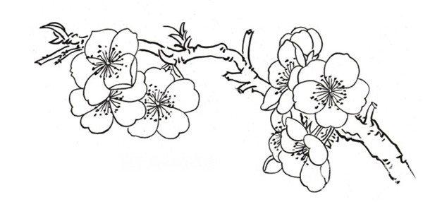白描桃花蝴蝶的绘画技法 3