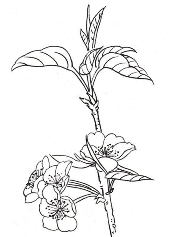 白描桃花蝴蝶的绘画技法 4