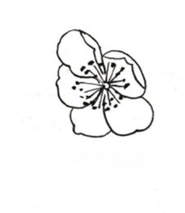 学画画 国画教程 工笔画 > 白描桃花蝴蝶的绘画技法      桃花,即桃树
