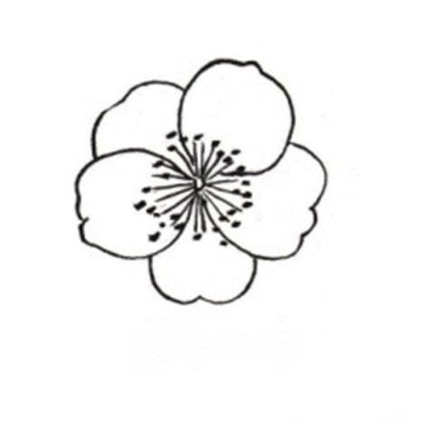 白描桃花蝴蝶的绘画技法