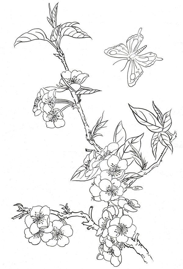 白描桃花蝴蝶的绘画技法(4)
