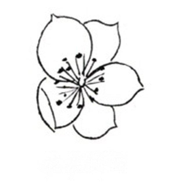 学画画 国画教程 工笔画 > 白描桃花鸟鸣的绘画步骤      桃花,即桃树