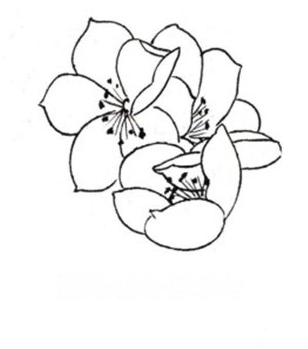 白描桃花鸟鸣的绘画步骤(2)_国画教程_学画画_我爱