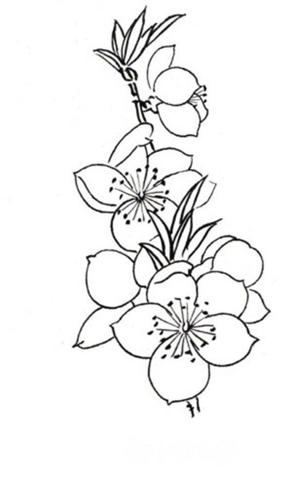 学画画 国画教程 工笔画 > 白描桃花鸟鸣的绘画步骤(3)      花朵组合