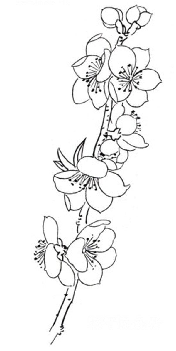 白描桃花鸟鸣的绘画步骤(4)