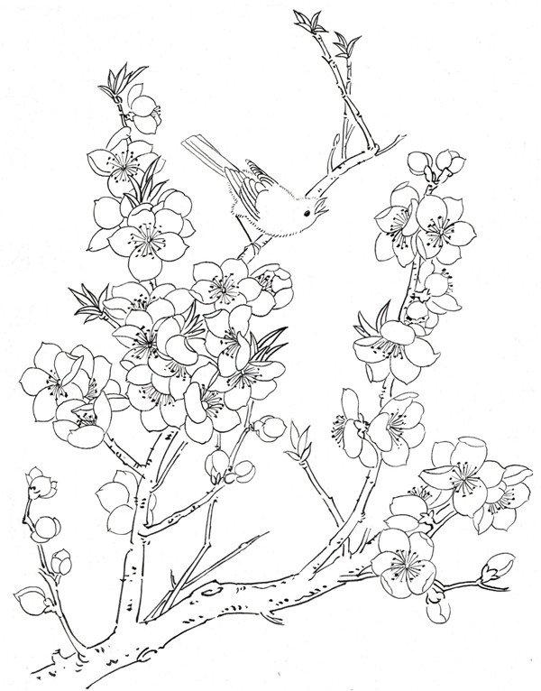 白描桃花鸟鸣的绘画步骤 5