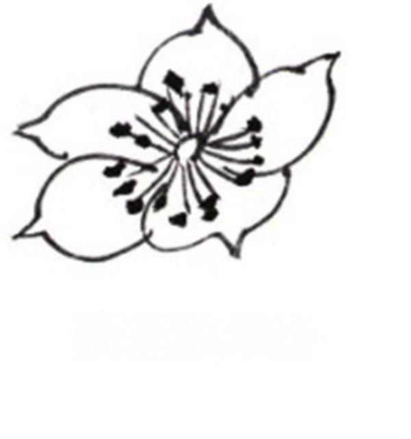 海棠花画法简笔画图片-白描海棠花鸟作品欣赏图片