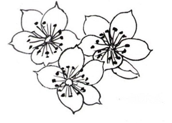 海棠花和鸟局部画法   白描海棠花朵的形态   白描海棠花和鸟局部一   图片